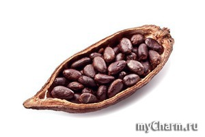 Масло какао в косметике
