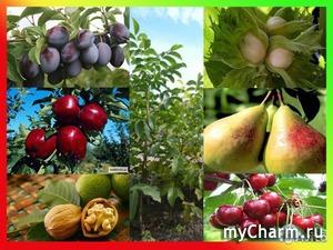 По плодам их