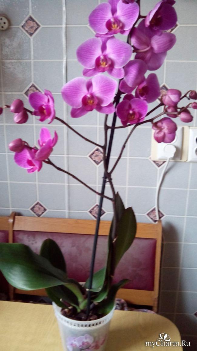 Не цветут орхидеи в домашних условиях что делать 425