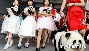 В Китае появилась мода на необычных домашних животных