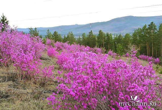 Скачивание изображения: крупно, вид, красиво 286596 / разрешение: original / раздел: цветы / гудфонрф (goodfon)