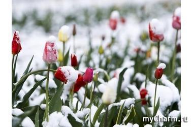 Снег в Симферополе в конце апреля