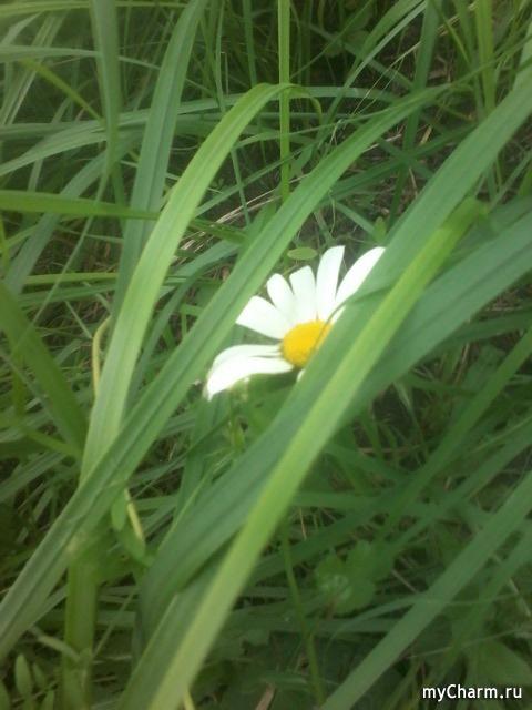 раз цветочек