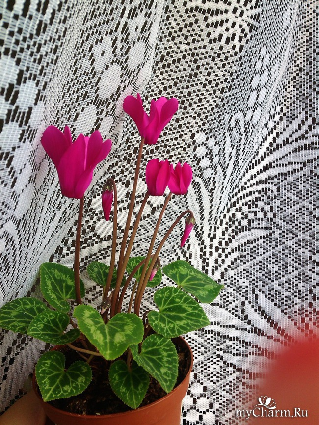 Мои цветущие цветочки