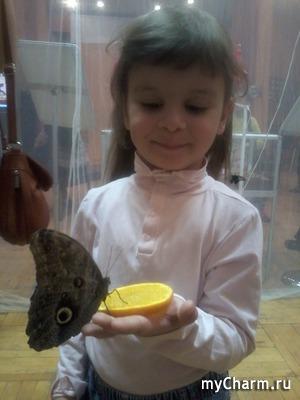 Если на вас села бабочка - будете счастливы!