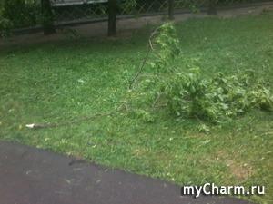 Ураган в Москве.