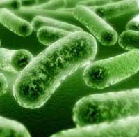 10 Природных антибиотикиков