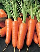 Раз морковка, два морковка