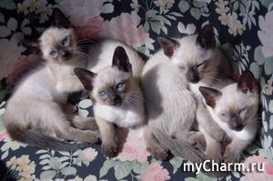 Вы бы купили парфюм с запахом кошки?