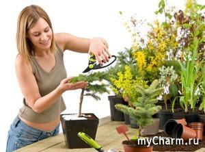 11 эффективных удобрений