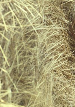 Сухая зудящая кожа головы, после родов проблемы с волосами, сухие волосы? Вам сюда! Скорей!