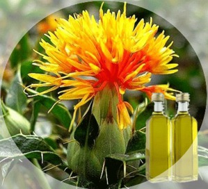 Польза масла сафлора