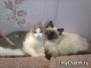 Ну уж раз Всемирный день кошек был, расскажу и я про своих.