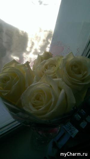 Белые розы, а за окном морозы
