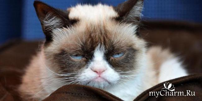 фото 1: 7 вещей, которые ненавидит ваша кошка