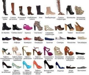 Разнообразие женской обуви