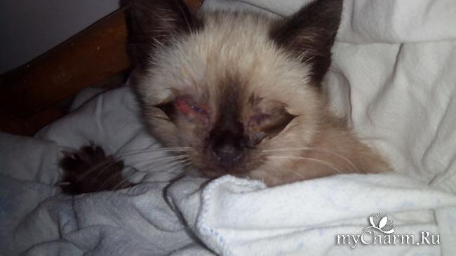 кошачьи болезни