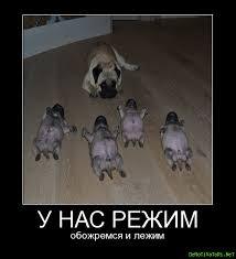 У нас режим... Обожремся и лежим..))