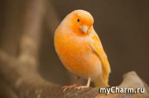 Срочно всем-всем! Помогите нашей Птичке. ру выбрать логотип!