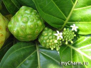 Чем может быть полезен фруктовый чай Нони