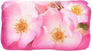 Косметика с розой, которую вы не забудете