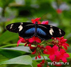 Бабочки - магниты, как живые.
