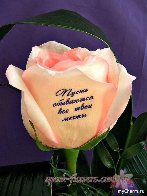 Картинки цветы для девушки с надписями, днем