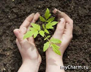 Как ухаживать за руками после работы в саду?
