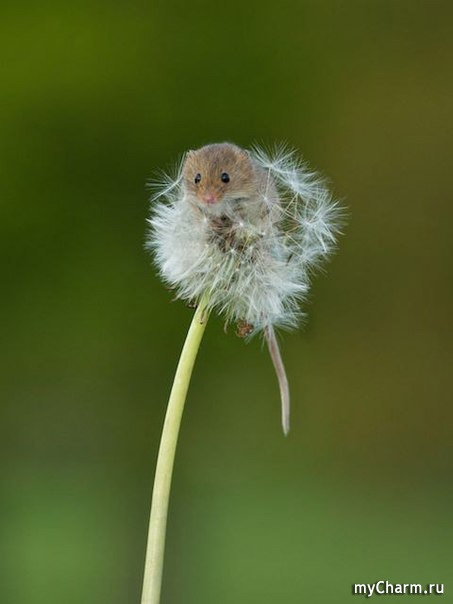 фото 7: Мышиный дом