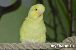 Женщину признали виновной после свидетельских показаний… попугая