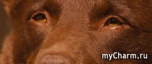 КИНО-флешмоб: Рыжий пёс.
