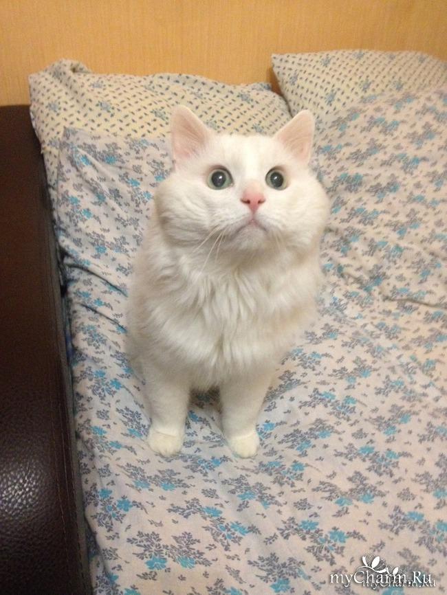ФотоЧарм коты