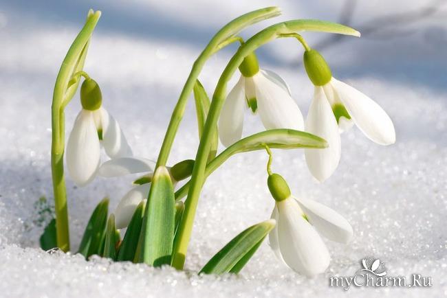 Дамы! MyCharm сердечно поздравляет ВАС с праздником 8-го марта!