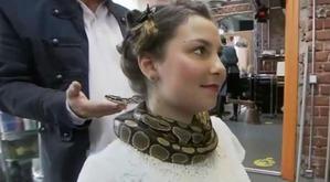 Немецкий салон красоты предлагает клиентам массаж шеи живым питоном