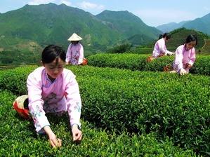 Моя любовь к Востоку началась с чая.