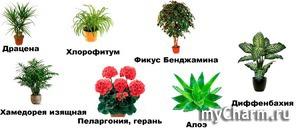 Растения, улучшающие атмосферу в доме