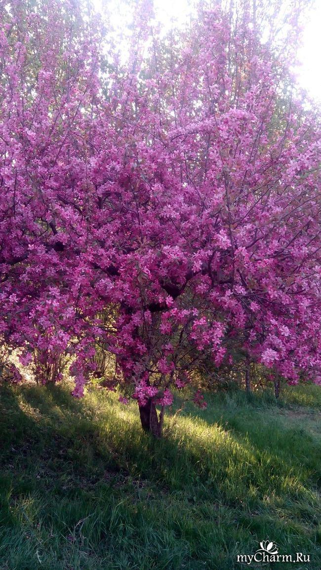 Цветочки - ягодки