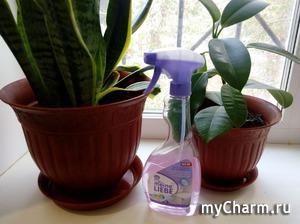 Чистые окна с Meine Liebe
