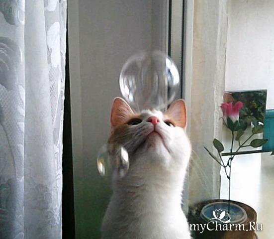 Яша и пузырики