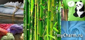 Бамбуковое чудо
