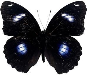 Чёрная бабочка (2017).