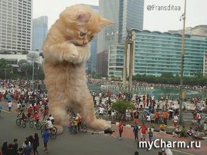 Гигантские котики захватили мир (фото)