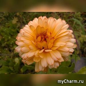 """Приз за флешмоб фоточарм """"Оранжевое настроение"""" получен"""