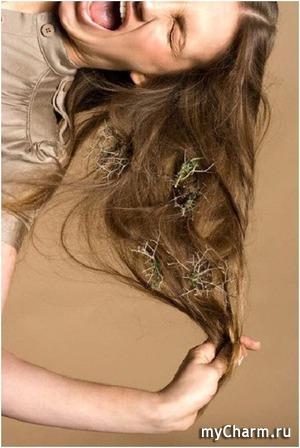 Реконструкция волос: локоны в охапку и бегом в салон?