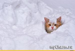 Все снежку радуются, покажу и я сколько его у нас)