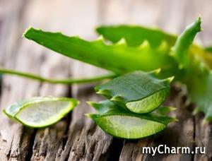 Превосходный растительный шампунь и кондиционер без сульфатов от Herbalife