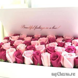 Царственно божественная роза – в подарок!