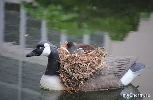 ФотоЧарм птицы