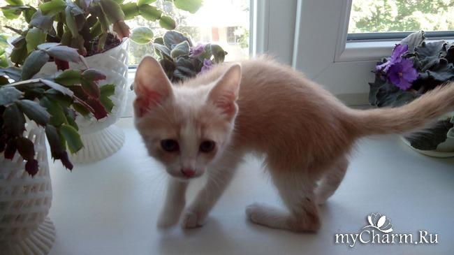 фото 2: Пристройство котят: затишье было недолгим