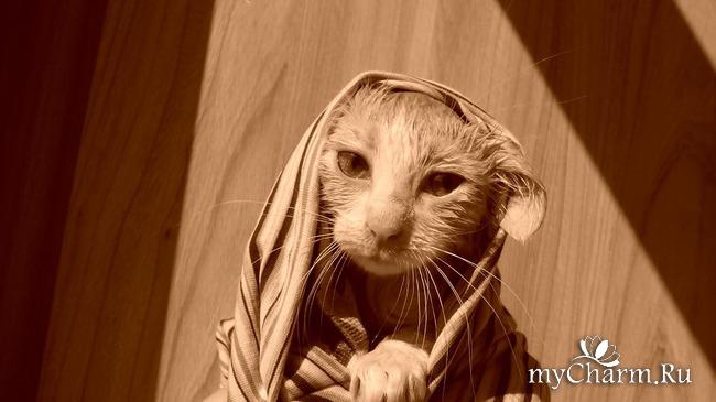 фото 4: Пристройство котят: затишье было недолгим